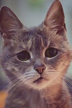 ラブリー-KittyCats、778:バニラの膣