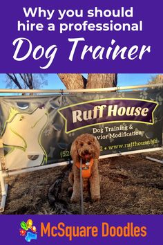 Practical Dog Training Tips for Busy People - X is for eXperts. Finding a dog obedience trainer who works well with you and your dog is crucial for success with dog training. Read why at McSquare Doodles! #McSquareDoodles #dogtraining #dogtrainingtips #therapydogtraining