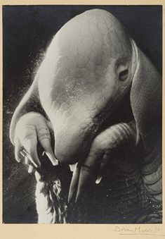 Dora Maar: Pere Ubu (2005.100.443) | Heilbrunn Timeline of Art History | The Metropolitan Museum of Art