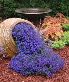Blue lobelia seeds - Gorgeous!