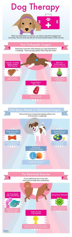 9 Dog Toys That Are Perfect For Dogs Recovering From Surgery | Dog Health Tips | Dog Infographics |