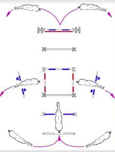 www.horsephysio.ch