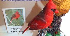 NASZE PTAKI   Lena jest miłośniczką ptaków zresztą wszystkiego co lata sama bardzo by chciała latać jak to pięciolatka .   Często jedźmy p... Parrot, Crafts For Kids, Fish, Pets, Animals, Parrot Bird, Crafts For Children, Animales, Kids Arts And Crafts