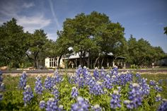 34 Best Bluebonnet Amp Wildflowers The Highland Lakes Tx
