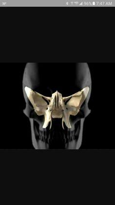 sphenozygomatic suture sphenoid bone zygomatic bone | cranio, Sphenoid