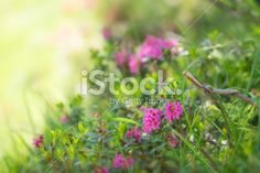 Beautiful flowers background, close-up. Flower Backgrounds, Image Now, Close Up, Beautiful Flowers, Royalty Free Stock Photos, Plants, Pretty Flowers, Planters, Floral Backgrounds