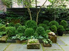 Julianne Moore - Two antique English stone troughs from Laurin Copen Antiques are filled with succulents and moss. Back Gardens, Small Gardens, Outdoor Gardens, Courtyard Gardens, Courtyard Ideas, Pergola Ideas, Julianne Moore, Small Space Gardening, Garden Spaces
