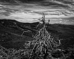 """Lone tree on a mountain"" DEWarwick Photography  (Shot on Cannon Mountain, New Hampshire)"