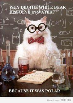 Arctic ░ science cat