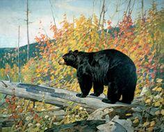 Carl Rungius Black Bear