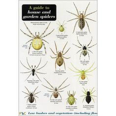(£3) 1x A guide to house and garden spiders chart at rspb.org.uk