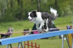 Ever wonder where Dog Training came from? Click to read our History of Dog Training on the BBS Blog! #dogtraning #dogs #dogtrainer // BestBullySticks.com