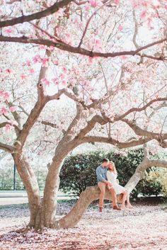 Holy smokes, this spring engagement session is to die for! Breathtaking cherry blossom pictures for sure and overall beautiful engagement pictures! Engagement Photo Poses, Engagement Photo Inspiration, Engagement Pictures, Engagement Shoots, Engagement Photography, Wedding Pictures, Wedding Photography, Spring Photography, Country Engagement