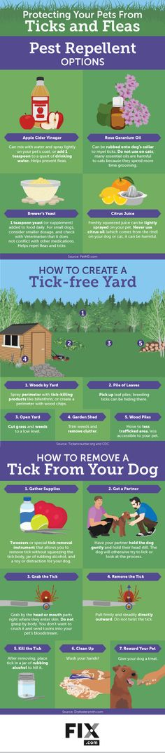 Protecting your Pet from Ticks & Fleas Infographic #Infographics