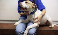 7 inspiring stories of stray dogs saving perfect strangers