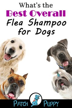 Getting the best flea shampoo for your dog depends on if your dog is a puppy, has sensitive skin, or has a bad infestation. Flea Shampoo For Dogs, Puppy Shampoo, Diy Dog Collar, Cute Dog Collars, Best Puppies, Best Dogs, Dog Itching, Dog Care Tips, Dog Costumes
