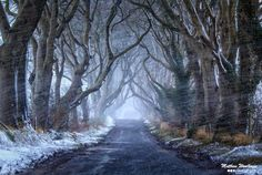 Dark Hedges Snow Blizzard