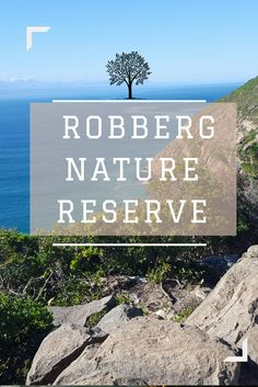 Robberg Nature Reserve is one of the most beautiful nature reserves in South Africa. Have a look at my blog post to get an idea of what it's like.