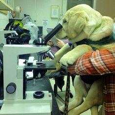 Lab Consultation