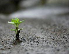 Ako prekonať hlavnú pascu pri zhmotňovaní?
