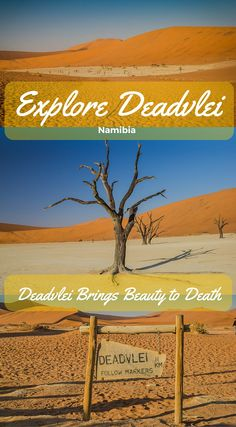 Explore Deadvlei, Namibia. Beadvlei brings beauty to death! Deadvlei is surrounded by the highest sand dunes in the world. Explore Deadvlei Park of the Namib-Naukluft National Park make the Deadvlei landscape look like a scene out of a movie. The remaining skeletons of the trees are believed to be around 900 years old and stand within the Deadvlei pan completely black and dead. Click to read the full Adventure travel blog post at…
