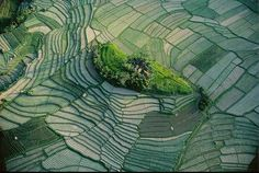 Ilôt dans les rizières en terrasse de Bali, Indonésie (8°22' S - 115°08' E). Organisés en subaks (coopératives agricoles), les Balinais ont exploité le relief volcanique et les quelque 150 cours d'eau de leur île en aménageant un vaste système d'irrigation qui permet de pratiquer la riziculture. L'eau retenue dans les collines est conduite dans les champs en terrasse par un réseau de canaux creusés selon les courbes de niveau. © Yann Arthus-Bertrand - Tous droits réservés