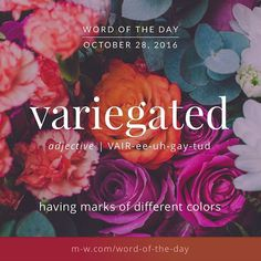 Variegated: (adj.) having marks of different colors.