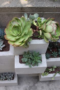 Concrete planter with succulents!