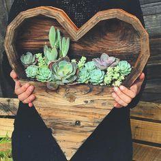 "9,215 Likes, 124 Comments - Hippie Vibes ☯️✨ (@goodjujutribe) on Instagram: ""♡ Succulent love via @samanthastremmel ✨"""