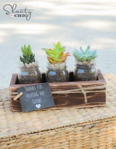 End of school teacher gifts - Lolly Jane Succulent Planter Diy, Succulent Gifts, Succulent Centerpieces, Diy Planters, Succulent Display, Succulent Care, Homemade Teacher Gifts, Homemade Gifts, Diy Gifts