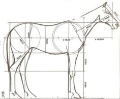 Horse proportions