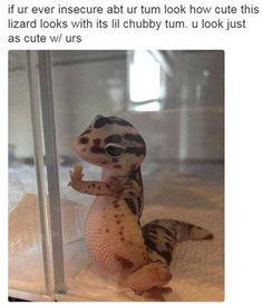cute lizard with tummy - Google Search