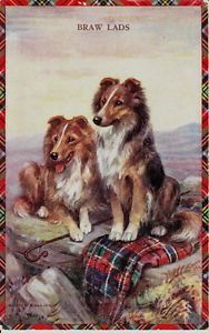 MABEL GEAR SHETLAND SHEEPDOG PAIR ARTIST DRAWN DOG POSTCARD