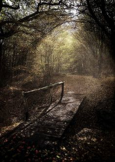 """Omg, looks like a fairytale! """"The road less travelled"""""""