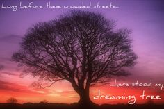 The dreaming tree - thank you Mr. Dave Matthews :)