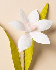 How to make lily flower from regular printer paper free template check out our diy paper flower narcissus mightylinksfo
