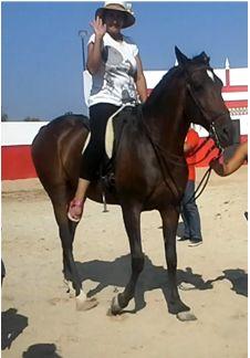 meu batismo  de cavalo em Sintra