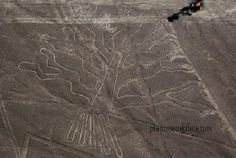 The Nazca Lines.Peru.Over 2000 years old, these drawings were created on a scale so large that they are only discernible from high above the surface, in a plane or spacecraft. Neither time nor weather have been able to erode them. They are in various shapes and are gigantic in size, the largest being that of a reptile, 700 ft / 180 Mts.