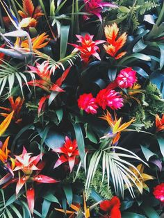 tropical flowers, Strelitzia, red and green floral inspiration Tropical Flowers, Motif Tropical, Tropical Garden, Exotic Flowers, Tropical Plants, Beautiful Flowers, Hawaii Flowers, Tropical Colors, Tropical Leaves