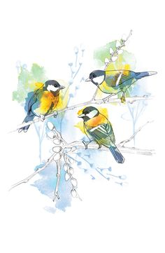 Birds by Willa Gebbie, via Behance