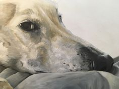 Close up Pet Portraits, Hand Painted, Horses, Pets, Artist, Painting, Animals, Beautiful, Animales