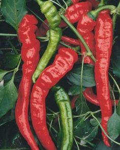 The Best Heirloom Vegetables | Fine Gardening