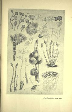 Text book of fungi, - Biodiversity Heritage Library