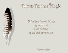 My Original Version of Falcon Feather Magic *Please check your local and federal guidelines for feather collection and possession! Feather Symbolism, Feather Meaning, Feather Art, Crow Feather, Animal Symbolism, Animal Spirit Guides, Spirit Animal, Wiccan, Witchcraft