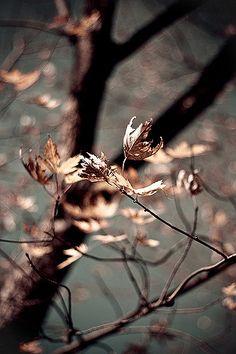 Fall ~~ by tartelette