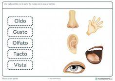 Ficha de los sentidos para niños de 6 a 7 años