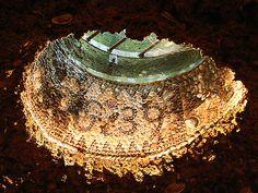 Grotto Skylight by Canis Major, via Flickr