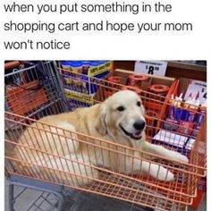 Golden Retriever Funny Shopping