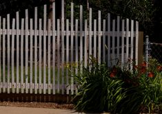 picket fences   white picket fence with some daylilies growing near the end