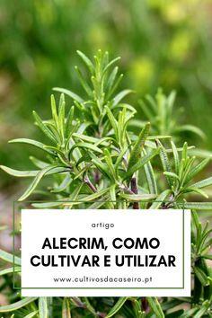 Eco Garden, Garden Types, Home And Garden, Growing Herbs, Aloe Vera, Vegetable Garden, Good To Know, Planting Flowers, Gardening